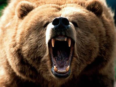 moty_bear.jpg